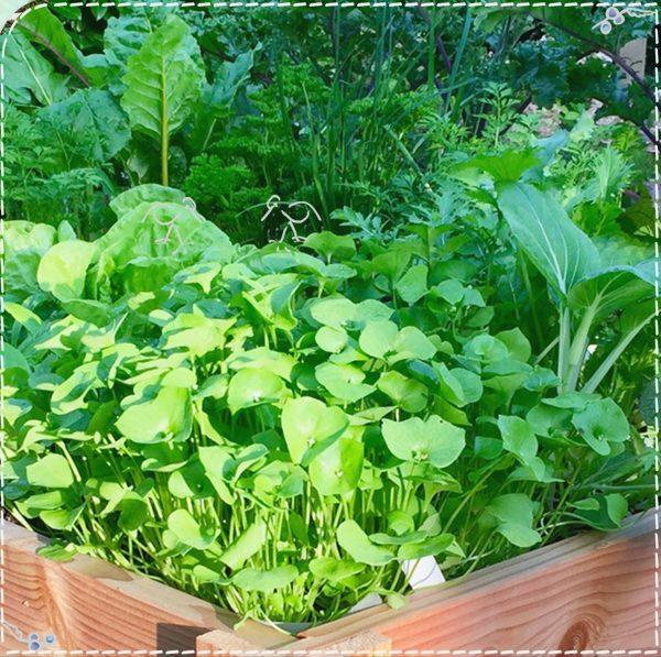 Een afbeelding van groentes in een moestuinbak van de Makkelijke Moestuin