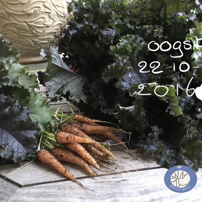Wortel in de Makkelijke Moestuin mix in de tuin van Berries op 03052019